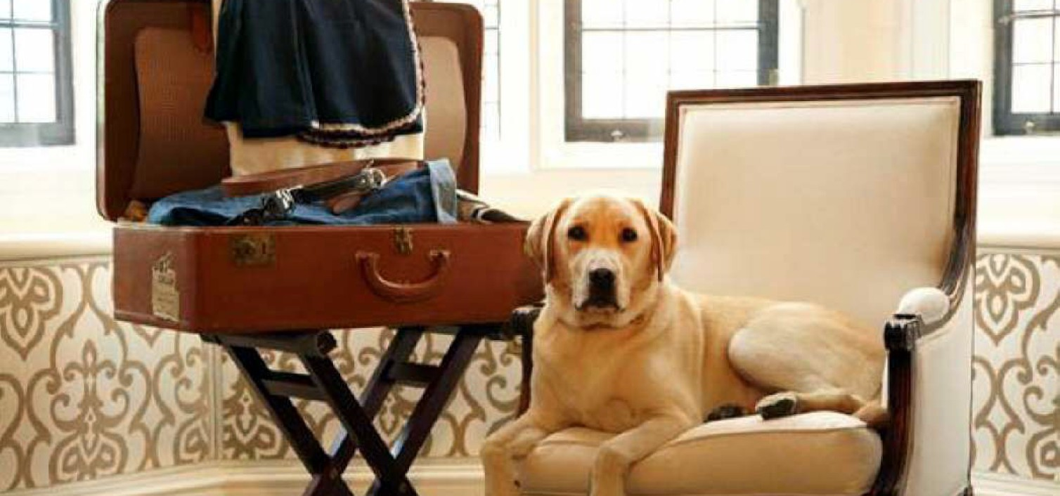 Muy top: hoteles pet friendly